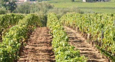 camping location mobil-home proche vignobles