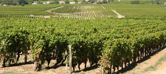 location mobil-home proche vignobles
