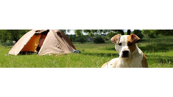 camping animaux landes